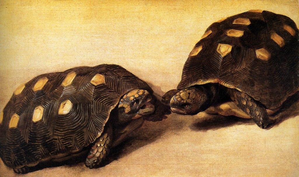 Albert Eckhout Tortoises
